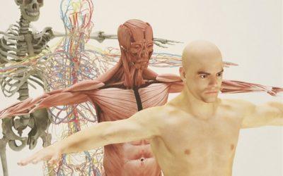 OSTEOPATIA: non solo ossa